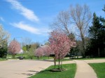 A Picture Perfect Day in a North Ridge Neighborhood, Coralville
