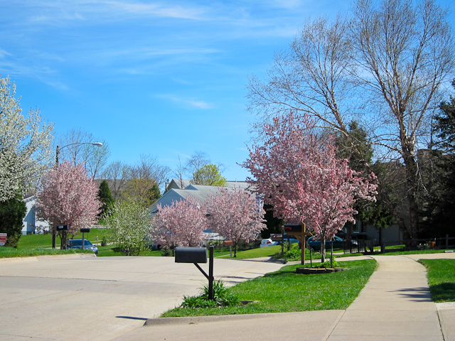 Spring in Coralville 2012